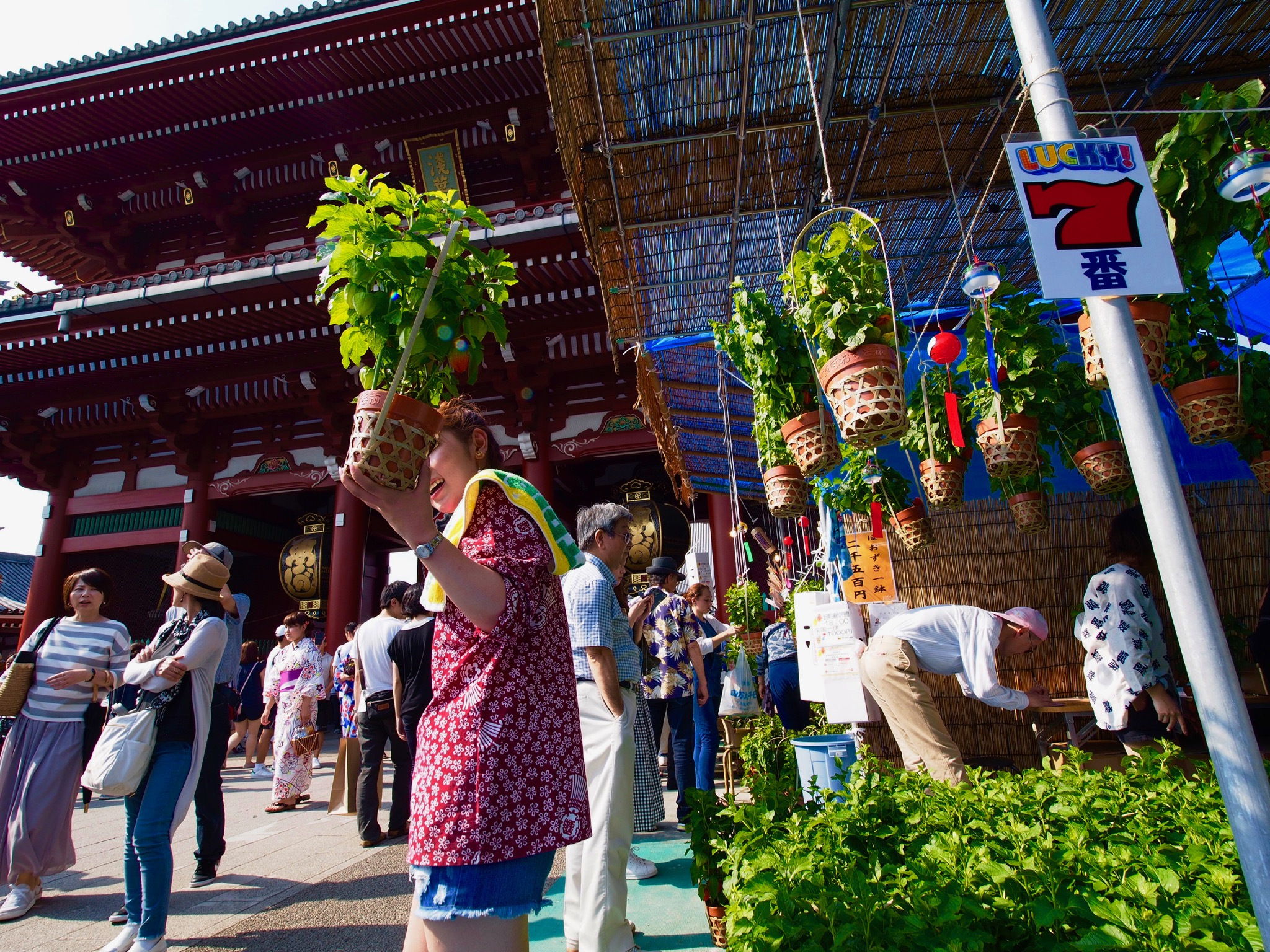 Chinese Lantern Plants market